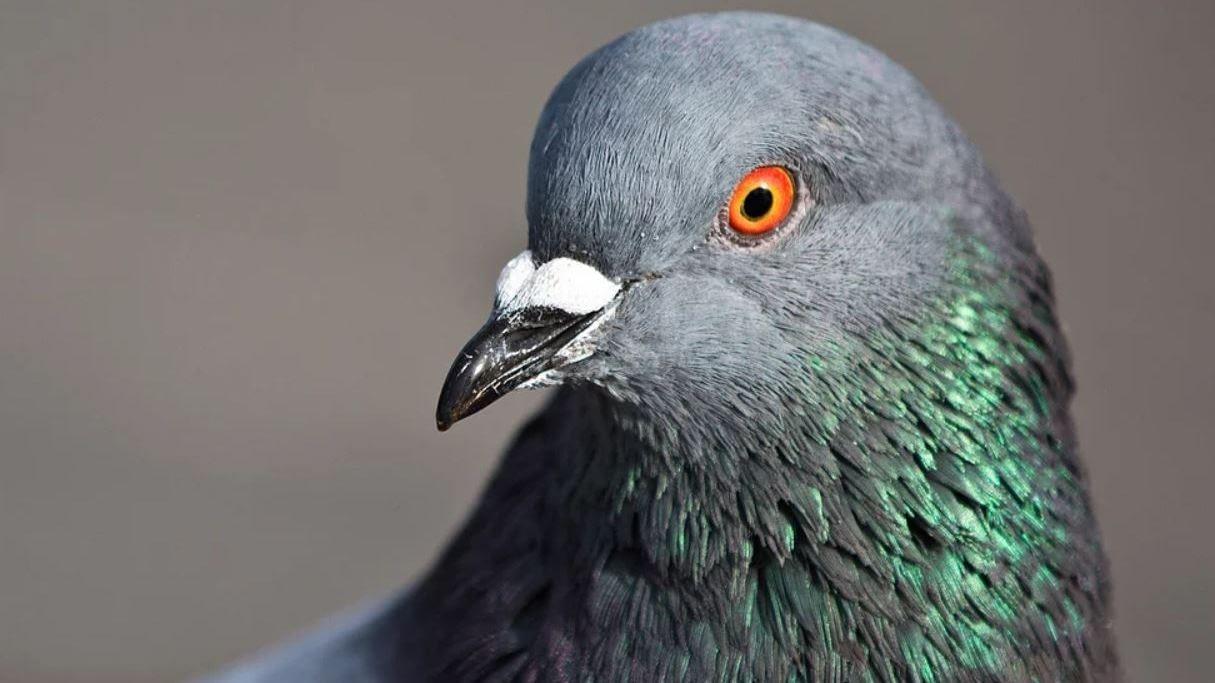 Hrotové systémy, sítě proti ptactvu, antistrakapoud.